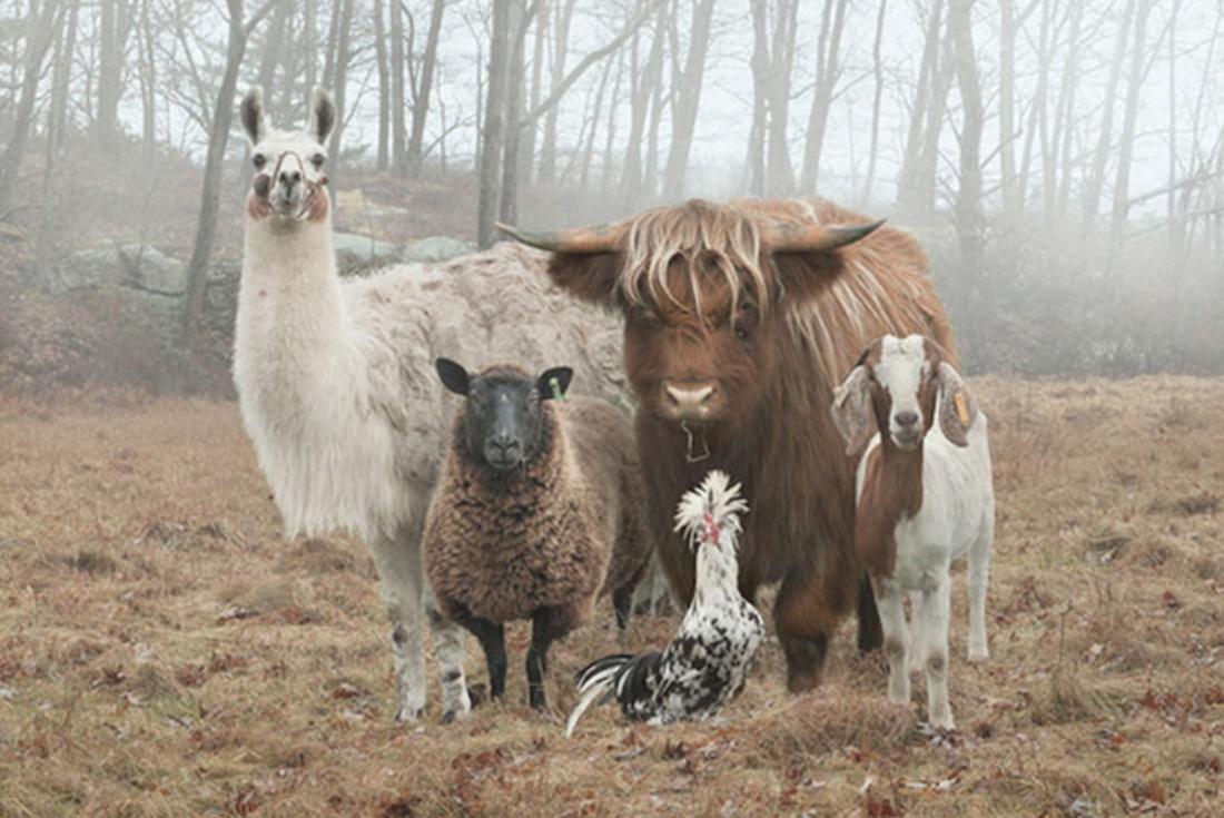 animals-sm